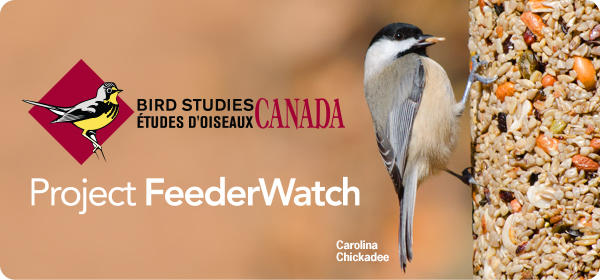 Project Feeder Watch