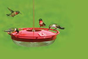 High Perch Hummingbird Feeder